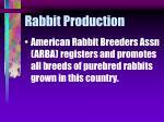 rabbit production10