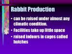rabbit production11