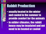 rabbit production12