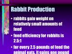 rabbit production13