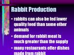 rabbit production14