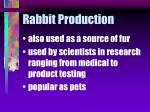 rabbit production16