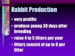 rabbit production17
