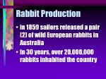 rabbit production19