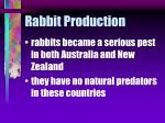 rabbit production20
