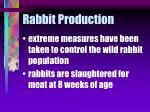 rabbit production21