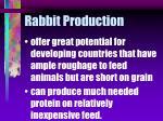 rabbit production22