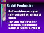 rabbit production5