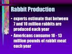 rabbit production8