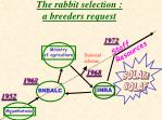 the rabbit selection a breeders request