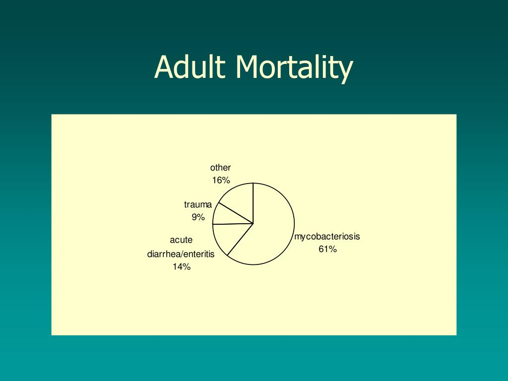 Adult Mortality