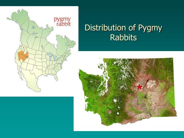 Distribution of pygmy rabbits