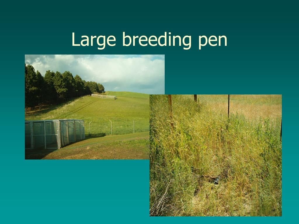 Large breeding pen