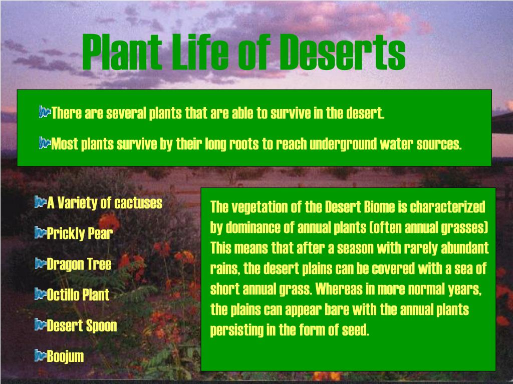 Plant Life of Deserts