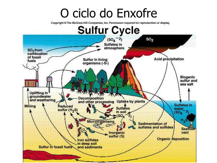 O ciclo do Enxofre