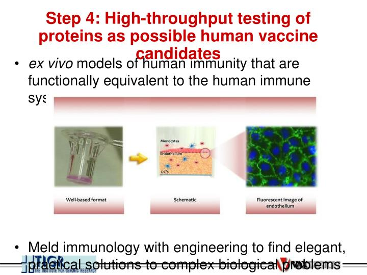 Step 4: High-throughput testing of proteins as possible human vaccine candidates