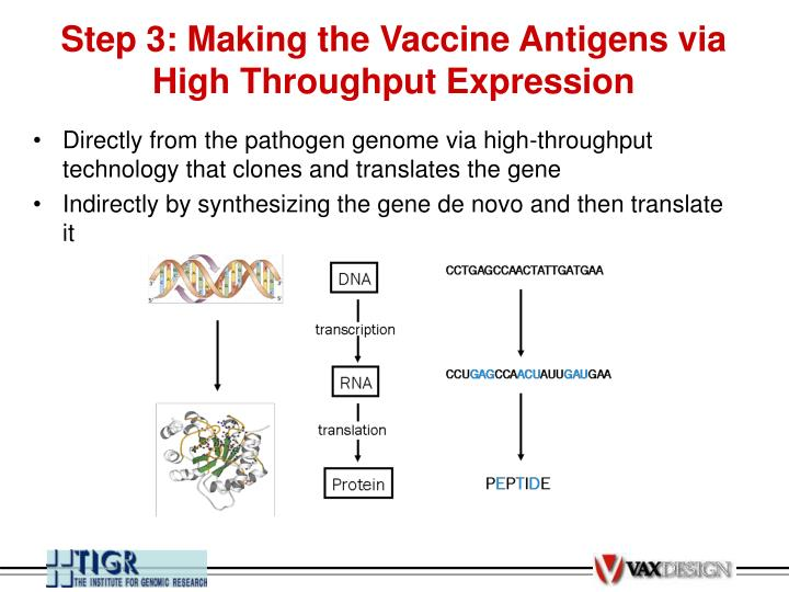 Step 3: Making the Vaccine Antigens via