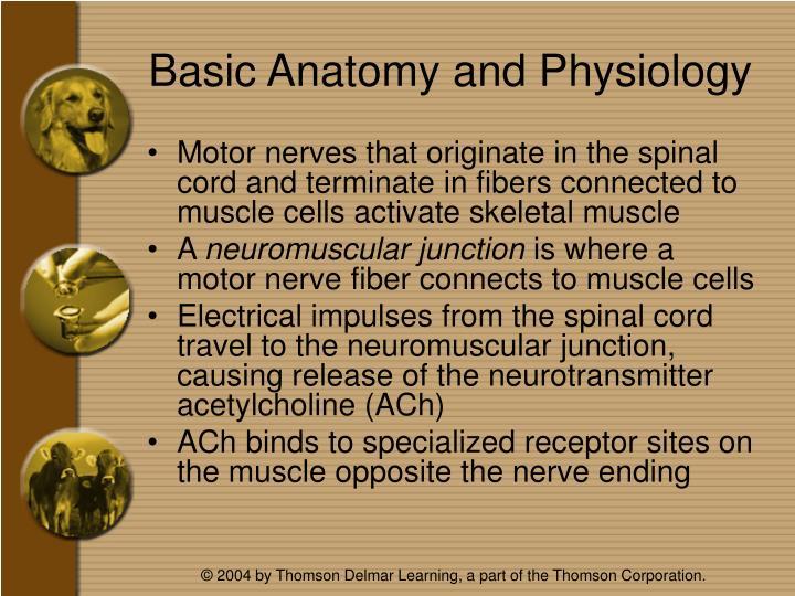 Basic anatomy and physiology1