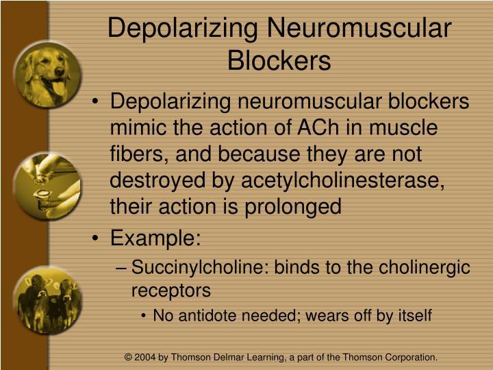 Depolarizing Neuromuscular Blockers
