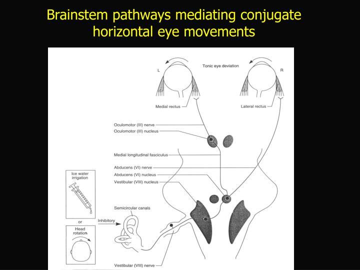Brainstem pathways mediating conjugate horizontal eye movements
