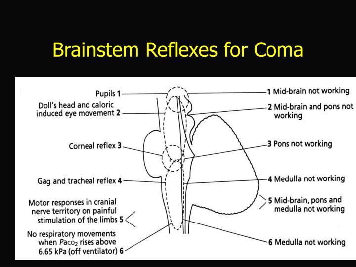 Brainstem Reflexes for Coma