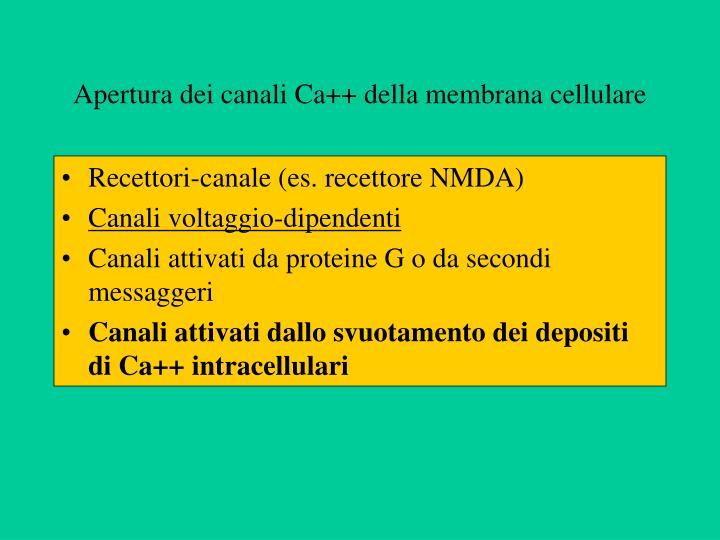 Apertura dei canali Ca++ della membrana cellulare