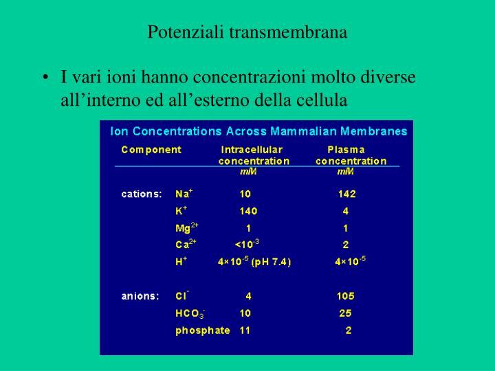Potenziali transmembrana