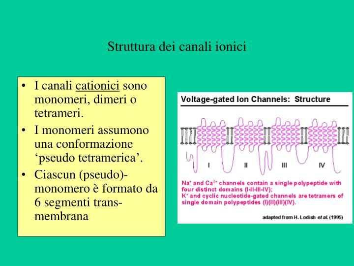 Struttura dei canali ionici