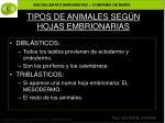 tipos de animales seg n hojas embrionarias