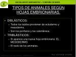 tipos de animales seg n hojas embrionarias1