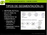 tipos de segmentaci n ii