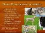 raz n 5 experimentos con animales