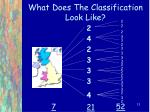 what does the classification look like