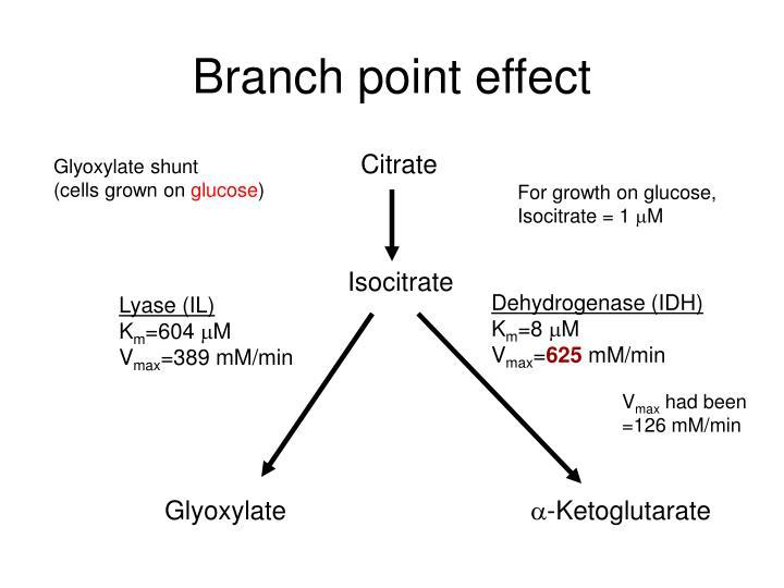 Branch point effect