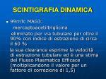 scintigrafia dinamica1