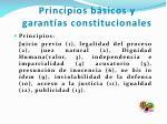 principios b sicos y garant as constitucionales