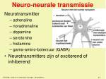 neuro neurale transmissie