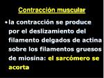 contracci n muscular