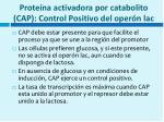 prote na activadora por catabolito cap control positivo del oper n lac
