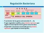regulaci n bacteriana