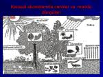 karasal ekosistemde canl lar ve madde d ng leri