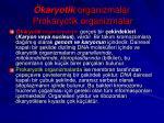karyotik organizmalar prokaryotik organizmalar