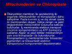 mitochonderien ve chloroplaste
