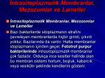 ntrasitoplazmatik membranlar mezozomlar ve lameller
