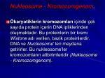 nukleosome kromozomgenom