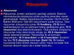 ribozomlar
