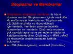 sitoplazma ve membranlar