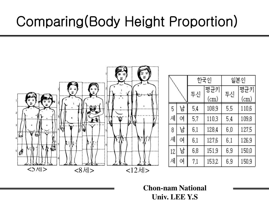 Comparing(Body Height Proportion)