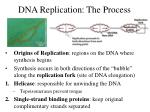 dna replication the process