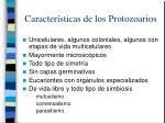 caracter sticas de los protozoarios